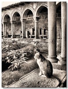 The cloister guardian