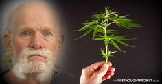 Because Police Broke the Law a 77yo Man Will Likely Die in Prison for Growing Pot Plants