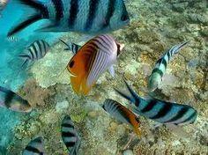 Foto sott'acqua