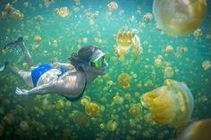 jellyfish lake parao - Google 検索