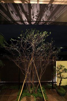 明暗のリズムを意識した光の演出。光のラインと陰影が際立つ和のエントランス。 #lightingmeister #pinterest #gardenlighting #outdoorlighting #exterior #garden #light #house #home #japanesestyle #entrance #bamboo #modern #shadow #lightandshade #和 #和風 #玄関 #エントランス #虎竹 #モダン #影 #明暗 #庭 #家 #光