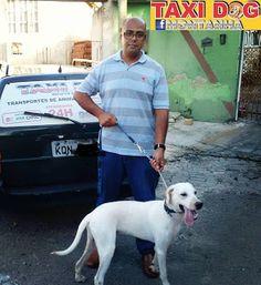 TAXI DOG MONTANHA TRANSPORTE DE ANIMAIS NO RIO DE JANEIRO: DOMINÓ24/02/2016 -- Esse cãozinho superativo aí da...