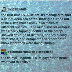 Gay Cephalopods it's a dream come true                                                                                                                                                     More