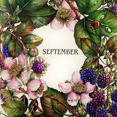 #EzRepost @shirley_tutopia with @ezrepostapp September, autumn is coming. ... #thefloweryear #leiladuly #September #berries #botanicalgarden #coloringbook #coloring #coloriage #colouringforadults #prismacolor #coloredpencils #adultcoloring #shirleytutopia #colouring #colouringbook #塗り絵の本 #大人の塗リ絵 #著色本 #Målarbok #Malbuch
