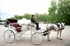White horse and carriage at wedding.