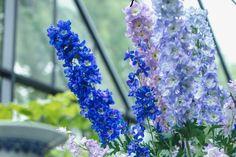Pantone Color of the year 2020 Color Of The Year, Pantone Color, Silk, Classic, Plants, Floral Arrangements, Blue, Colors, Flora