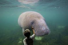 underwater, art numérique - PINSOLLE - Picasa Albums Web Underwater Art, Albums, Elephant, Digital, Animals, Picasa, Animales, Animaux, Animal