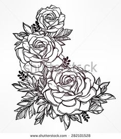 Vintage floral highly detailed hand drawn rose flower stem with roses and leaves. Victorian Motif, tattoo design element. Bouquet concept art. Isolated vector illustration in line art style.  - stock vector