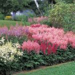 Shade gardens don't have to be boring. One of the best ways to add vivid color and lovely texture to shady areas is by planting Astilbes.