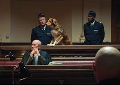 Los inocentes, así se llama la nueva campaña de la fundación francesa 30 Millions d'Amis, una asociación que desde hace años lucha contra el abandono y el maltrato y también contra el sacrificio de animales sanos. Look At Me, Wrestling, Death, Urban, Animales