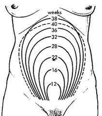 Weeks in the belly (don't know where the original came from, sorry).
