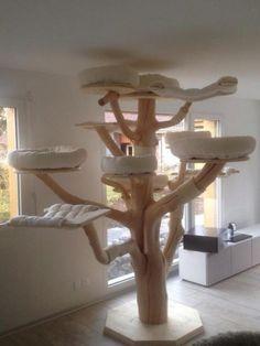 MAINE COON World - natural scratching trees - Main-Coon-Katze - Katzenbilder