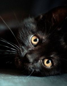 black and very cute