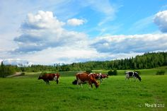 Finnish Countryside by ~Mandi98 on deviantART