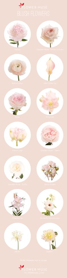 Our Favorite: Blush Flowers. See more on Flower Muse blog: http://www.flowermuse.com/blog/favorite-blush-flowers/