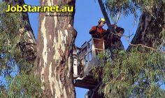 #ConsultingArboristJobsinPerthWA - Urgent Hiring: Consulting Arborist Jobs in Perth WA