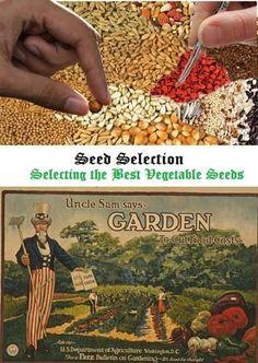 Vegetable Garden Seed Selection Tips