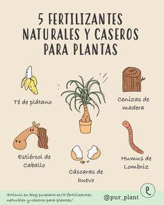 Eco Garden, Home Vegetable Garden, Natural Garden, Dream Garden, House Plants Decor, Plant Decor, Permaculture, Plant Information, Herbs Indoors