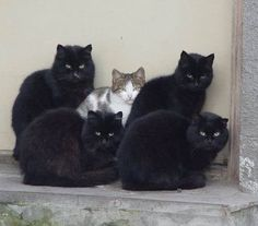 4 black cats are bodyguard.