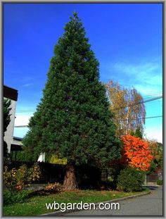 #wbgarden conifers gardening https://www.facebook.com/photo.php?fbid=10208999793300476&set=a.10200551489578163.203868.1486265823&type=3&theater