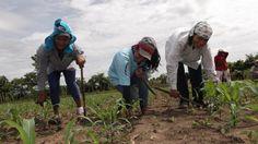 Camponeses salvadorenhos enfrentam os Estados Unidos por sementes