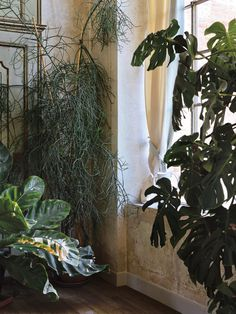 A%20collection%20of%20tropical%20plants%20in%20the%20loggia.%C2%A0