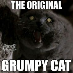 Church from Pet Sematary. The original grumpy cat