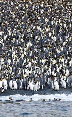 This is an island completely full of penguins!