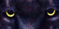 Black panter eye - Ojo de pantera negra