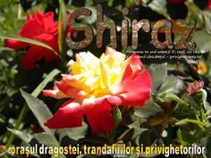 Islam, Presentation, Flowers, Royal Icing Flowers, Flower, Florals, Floral, Blossoms
