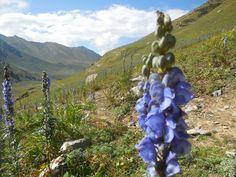 Kashmir great lakes trek Colorful Mountains, Great Lakes, Himalayan, Trekking, Himalayan Cat, Hiking