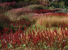 I have admired and watched Piet Oudolf's work since I first starting doing design work. His work with perennials is regarded as some of the most influential work that has been done. Piet to…