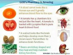 We See God's Design Even In the Food He Gave Us For Our Bodies. Eat Healthy! ┊ ┊ ┊ ☆ Follow me ---> https://www.facebook.com/dclark222 ┊ ┊ ★Visit my web site --> http://dreammin222.sbcspecial.com/  ┊☆Join Group- https://www.facebook.com/groups/nowisthetimegettinghealthy/  ★Join my Team--> http://dreammin222.sbcmovie.com/