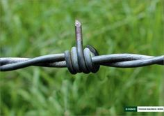 Tough barbed wire.