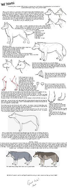 Wolf tutorial by novablue.deviantart.com