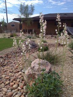 High Desert Landscaping on Pinterest Desert Landscape
