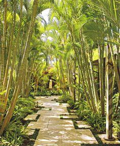 Triple Robellini Palm Tropical Gardening Pinterest Palms