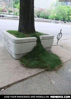 This planter sprung a leak - MemePix