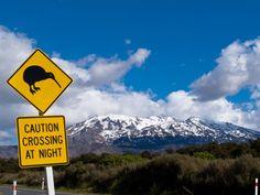 Neuseeland Tipps: Kiwi crossing! Schild am Mount Ruapehu