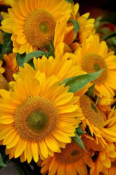 Sunflowers. I love sunflowers. When I get my farm house I will have a whole field of them in my back yard <3