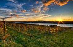 Atwater Vineyards, Hector, NY For More Follow https://www.facebook.com/JodysGuideToHomesInTheFingerLakesRegion/