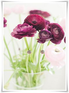 Ranunculus, love.
