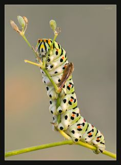 I don't like caterpillars, hope it makes a beautiful butterfly
