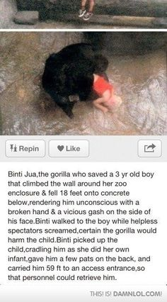 Funny pictures about Faith In Gorillas Restored. Oh, and cool pics about Faith In Gorillas Restored. Also, Faith In Gorillas Restored photos. Sweet Stories, Cute Stories, Awesome Stories, Beautiful Stories, Funny Animals, Cute Animals, Amor Animal, Human Kindness, Faith In Humanity Restored