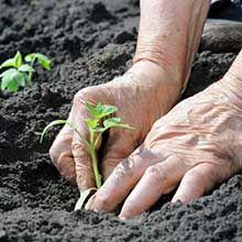Le dictionnaire des plantes par Ooreka.fr : Épilobe (fiche d'identité, variétés, plantation, culture, entretien et maladies)