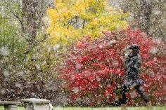 Snowtober: US north-east coast hit by unseasonal October snow storm
