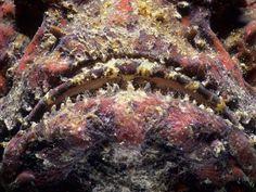 Photo: Close-up of a fish face