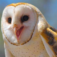 24 espécies de corujas que vão te impressionar