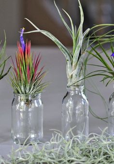 Sélections de tillandsias faciles à cultiver Popsicle Stick Crafts, Craft Stick Crafts, Crafts For Kids, Air Plants, Indoor Plants, Deco Cactus, Amaryllis, Air Plant Display, Pot Plante