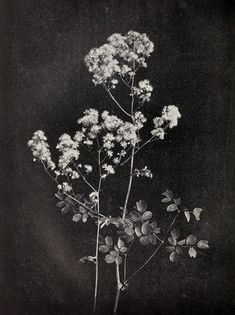 Dark Flowers, Love Flowers, Flowers Nature, Wild Flowers, Art Floral, Eerie Photography, Flower Photography, Iphone Wallpaper Vsco, Pressed Flower Art